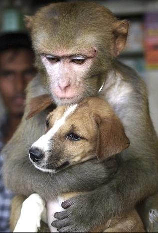 macaco e cachorro