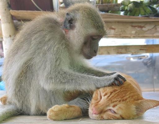macaco e gato