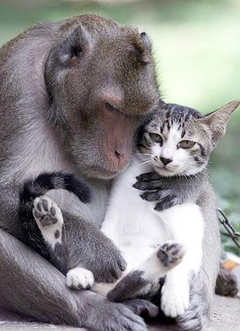 macaco gato