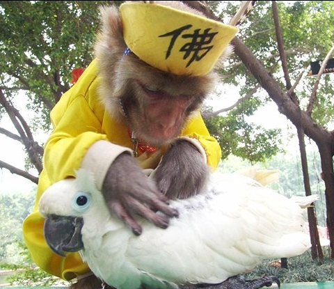 mono e papagaio
